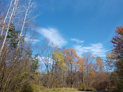20191015_FS_Allegheny_KLC_001 (usfs_Eastern_Region) Tags: outside national naturephoto leaf leaves colors colours tree trees flowers landscape yellow lake orange red autumn fall foliage pennsylvania allegheny forest james city aspen black cherry sugar maples oak