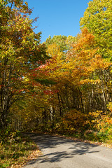 191015-FS-Allegheny-CJW-026 (usfs_Eastern_Region) Tags: outside national naturephoto leaf leaves colors colours tree trees flowers landscape yellow lake orange red autumn fall foliage pennsylvania allegheny forest jakes rocks scenic overlook road