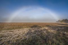 Anglų lietuvių žodynas. Žodis color spectrum reiškia spalvų spektras lietuviškai.