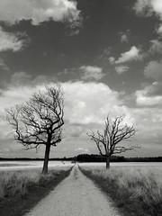Deelerwoud (alowlandr) Tags: grass tree deelerwoud path heather nature sky landscape outdoor gelderland scenery hiking scenic blackandwhite nopeople