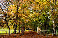 The blue door (claire.poole4) Tags: autumn beauty trees colours leaves door perthshire photography fence nikon