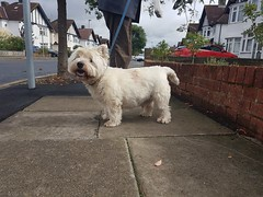 Photo of Callum, Walkies, 25th September 2019.