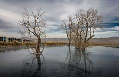 Mongolia_III