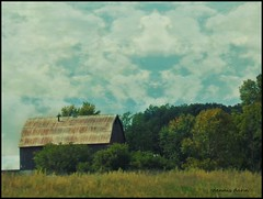 Right next to the woods. (novice09) Tags: barn woods farm ipiccy photoscape textures painterly digitalartpainting