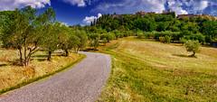 al Borgo di Querceto - at the Borgo di Querceto (Eugenio GV Costa) Tags: approvato albero tuscany countryside tree outside campagna nuvole cielo alberi cloud sky trees erba grass clouds