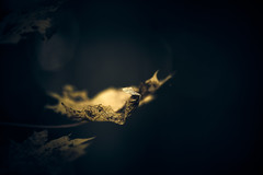 Autumn Mood (micke.vmix) Tags: carlzeiss zeiss aposonnart2135 sonnar135f2zf d850