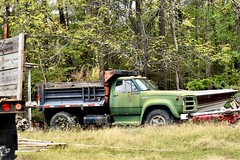 Olive Green - HTT (donnacurrall) Tags: dodge truck old rusty green dumptruck