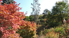 2019-10-07 Autumn in Teplice 1 (beranekp) Tags: czech teplice teplitz botanik botanic garden garten autumn herbst tree