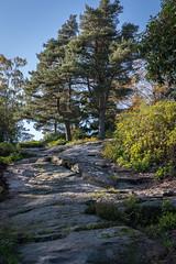 Craggside NT, stone pavement (Sueyork58) Tags: nationaltrust nt northumberland craggside