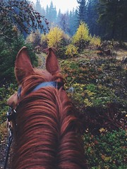 """This feeling (please follow me on insta """"windsofgreen"""") Tags: mist autumn fall forest serene sweden nature wilderness intothewild horse"""