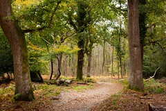 New Forest Trees and Shadows (1 of 1) (Noori's Photography) Tags: newforest landscape trees