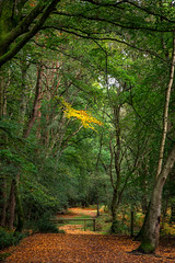 A walk in the woods (Barry.Turner.Photography) Tags: woods landscape light shadow water stream colour trees roots newforest hampshire uk england barry turner nikond810 nikkor24120mm