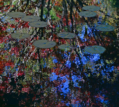 Shimmering Waters (davidwilliamreed) Tags: colorful vivid colors reflections lilly pads shimmering waters tree upsidedown abstract nature
