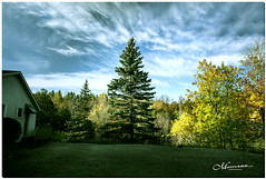 OCTOBER 2019 _383_NGM_3382-1-222 (Nick and Karen Munroe) Tags: firtrees fir pinetrees pine caledon northcaledon landscape landscapes fall autumn fallsplendor fallcolours karenick23 karenick karenandnickmunroe karenandnick munroe karenmunroe karen nickandkaren nickandkarenmunroe nick nickmunroe munroenick munroedesigns photography munroephotoghrpahy munroedesignsphotography nature brampton bramptonontario ontario ontariocanada outdoors canada d750 nikond750 nikon nikon2470f28 2470 2470f28 nikon2470 nikonf28 f28 colour colours color colors
