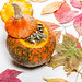 Autumn background with colorful dry leaves and pumpkins on a white wooden background