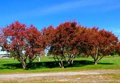 Fall colors, Wayne (ali eminov) Tags: wayne nebraska seasons fall colors trees