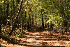 (chris98cooper) Tags: trees forest fall