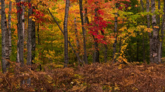 Autumn Woods (scott5024) Tags: fall color trees autumn beech maple landscape woods upper peninsula michigan pictured rocks national lakeshore
