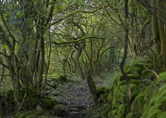 ShadowPath (Tony Tooth) Tags: nikon d7100 sigma 70mm path pathway footpath shady woods woodland spooky shadowy ecton ectonhill staffs staffordshire