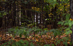IMG_6037 (kz1000ps) Tags: newengland october fall autumn foliage leaves trees red orange yellow green peak season brattleboro vermont meetinghouselane forest