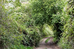 the green door (alyna16) Tags: nature forest green leaves outside fall path landscape