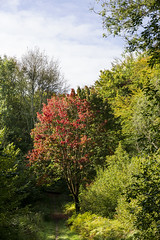 First Sign of Autumn (worthing.alan) Tags: autumn fall woods forest trees sussex england stane street path footpath trail track walk