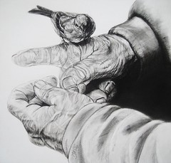 TRUST (Sketchbook0918) Tags: bird sparrow hands wrinkled old oldhands oldman birdfeeding resting charcoal drawing paper nature