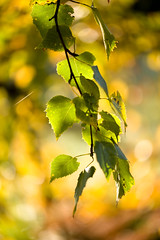 Hypnotic (tonguedevil) Tags: outdoor outside countryside autumn nature woodland forest trees leaves hamsterley colour light shadows sunlight morning green