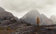 The Sentinel (chris.ph) Tags: larch burstallmountainpass mountain alberta canon6d ef1635mmf4lisusm