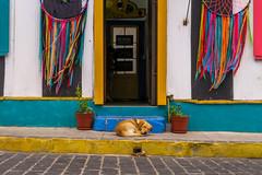 Cerro Concepción | Valparaíso (chamorojas) Tags: albertorojas chile colorful dog facade perro straydog valparaíso valpo chamorojas