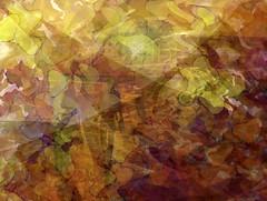 Fall/Autumn (soniaadammurray - On & Off) Tags: digitalart art myart abstractart experimentalart visualart picmonkey photoshop autumn seasons shadows reflections exterior colours collaboration barbarastanzak beauty look nature appreciate artchallenge spotlightyourbestgroup