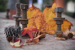 street still life (remiklitsch) Tags: leaf pinecone chestnut bolt screw street city urban autumn fall stillife evening remiklitsch nikon orange red rust miksang la leaves