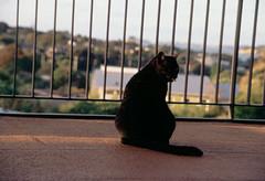Frame 13.jpg (njcull) Tags: 100n 35mmfilm agfaphotoprecisa100 auckland canoneos33 e6 film glendowie newzealand precisa100 cat slide