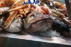 Weird fishes (vera ernelli) Tags: color digital fish ice water copenhagen denmark sony 200iso fishes danmark unedited 2019 sonynex nex6