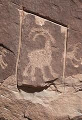Petroglyph / Amasa Trail (Ron Wolf) Tags: anthropology archaeology blm kanecreekcanyon nativeamerican bighornsheep petroglyph rockart theft vandalism zoomorph utah