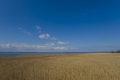 Usedom baltic sea sunny day outdoor 09042019 0209 Kopie (Dirk Buse) Tags: loddin mecklenburgvorpommern deutschland germany usedom outdoor natur landschaft haff