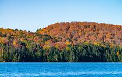 17_DSC8841 (doug.metcalfe1) Tags: 2019 algonquinprovincialpark dougmetcalfe fall nature ontario opeongolake outdoor provincialpark fallcolours fallleaves
