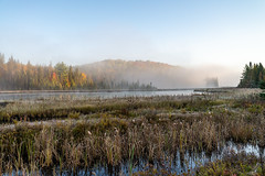 8_DSC8821 (doug.metcalfe1) Tags: 2019 algonquinprovincialpark costellocreek dougmetcalfe fall nature ontario outdoor provincialpark fallcolours fallleaves fog mist