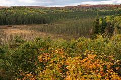 1_DSC8793 (doug.metcalfe1) Tags: 2019 algonquinprovincialpark dougmetcalfe fall nature ontario outdoor provincialpark fallcolours fallleaves