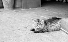 (von Calven Lee) Tags: leica leicam6 m6 rollfilm blackandwhite blackwhite bw 11114 summilux cat kodak100tmax