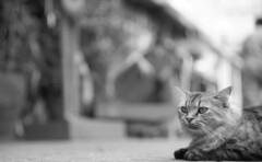 (von Calven Lee) Tags: leica leicam6 m6 rollfilm blackandwhite blackwhite bw 11114 summilux kodak100tmax cat
