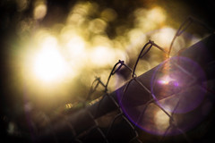 Blinded... (Sarah Rausch) Tags: dof depth helios bokeh hff fencefriday fence 442 flare blinded burst chainlinkfence chainlink contrast moody historyrepeatsitself