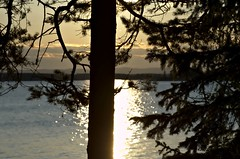 Summer evening (Stefano Rugolo) Tags: stefanorugolo pentax k5 pentaxk5 kmount tamronspaf90mmf28dimacro11 tamron90mm sunset trees silhouettes shimmer sun baltic balticsea archipelago sweden