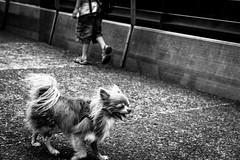 A deux ou quatre pattes. (LACPIXEL) Tags: pattes chien dog perro enfant niño child kid rue street calle paris lavillette noiretblanc blancoynegro blackandwhite sony flickr lacpixel