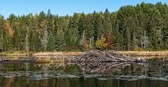 26_DSC3074 (doug.metcalfe1) Tags: 2019 algonquinprovincialpark dougmetcalfe fall grahamcreek nature ontario outdoor provincialpark beaverlodge