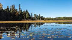 24_DSC3064 (doug.metcalfe1) Tags: 2019 algonquinprovincialpark dougmetcalfe fall grahamcreek nature ontario outdoor provincialpark