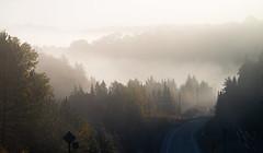 7_DSC8819 (doug.metcalfe1) Tags: 2019 algonquinprovincialpark dougmetcalfe fall hyw60 nature ontario outdoor provincialpark fallcolours fallleaves mist