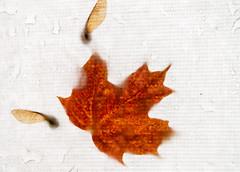 3_DSC8809 (doug.metcalfe1) Tags: 2019 algonquinprovincialpark dougmetcalfe fall nature ontario outdoor provincialpark fallleaves leaf tent
