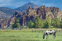 Horse Smith Rock 2291 C (jim.choate59) Tags: jchoate on1pics horse rock smithrock oregon grazing rural agriculture centraloregon deschutescounty bendoregon hff