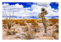 desert (rcfed) Tags: canon digital color usa desert cloud blue sand plant noun
